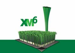 フィールドターフXM6